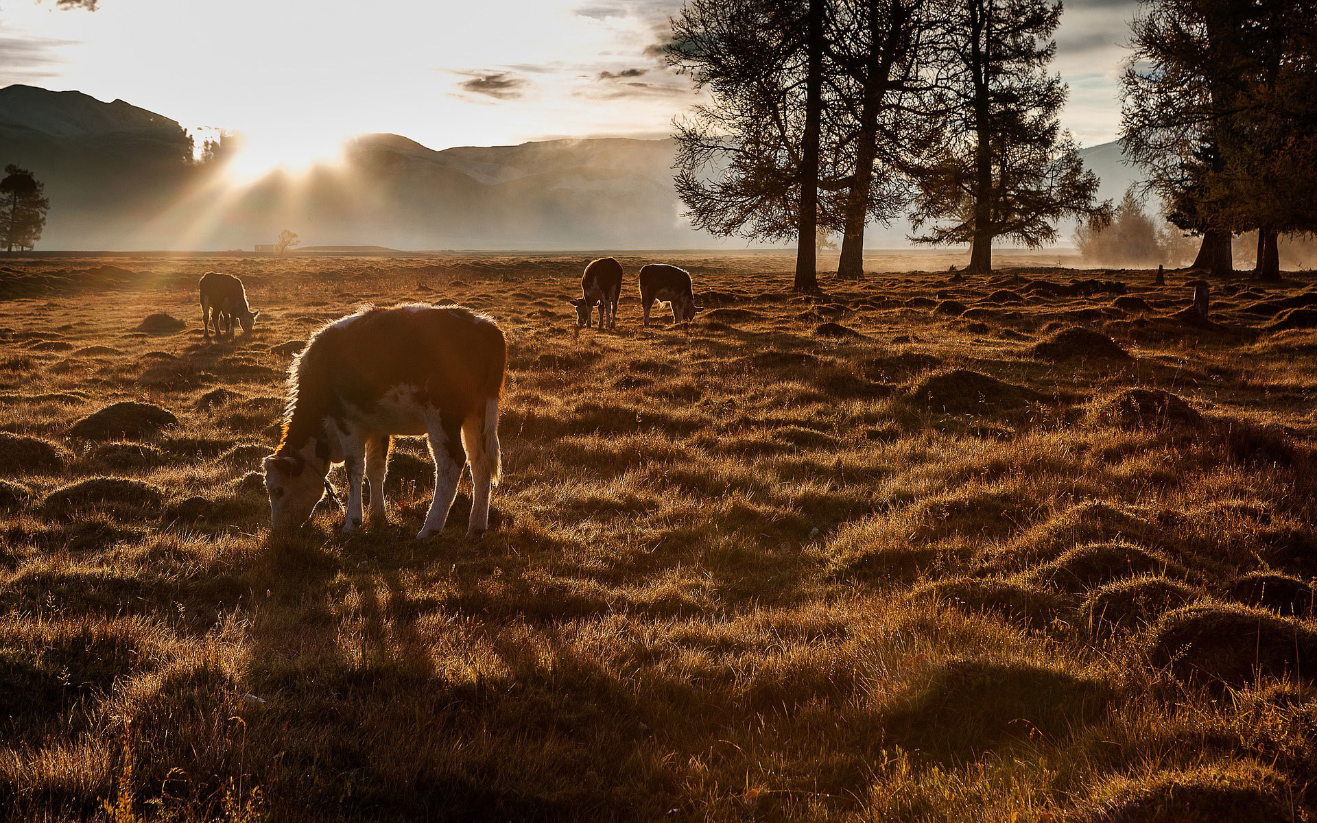 Tiere bei Sonnenaufgang